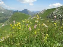 Italy, Alpes, May 2013